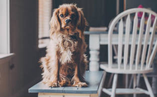 Best Pet-Friendly Cafes