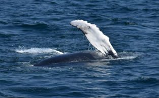 Coolest & Cruisiest Whale Watching Hot Spots