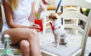 41 Pawfect Dog-Friendly Café's & Bars