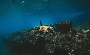 Record-breaking nesting season for Sea Turtles