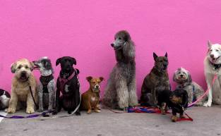 Your Friend Group as Dogs